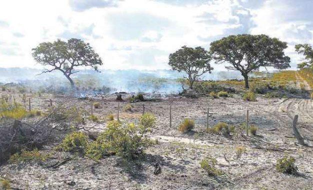 Estudo prevê extinção de um terço das espécies nativas do Cerrado em 30 anos