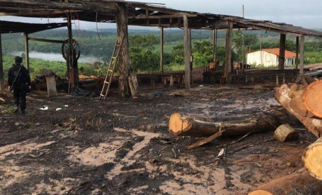 PF realiza operação contra extração ilegal de madeira no Maranhão