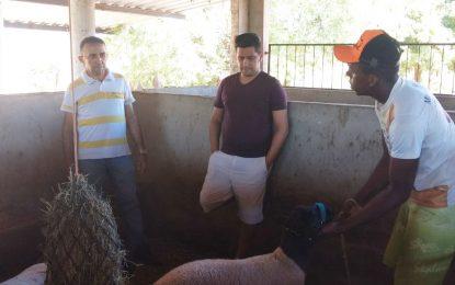 Léo Magalhães adquire caprinos no Piauí e investirá na criação de animais
