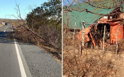 Vento derruba árvore na BR-316 e causa acidente com carreta