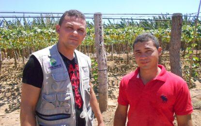 Irrigante inova e passa a produzir uva nos Platôs de Guadalupe