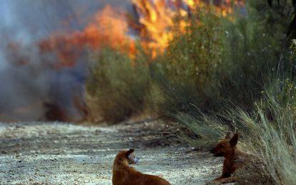 Municípios de Floriano, Jerumenha, Uruçuí, recebem alerta de risco de incêndios