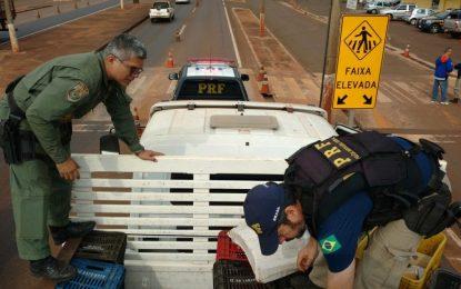 PRF apreende dois caminhões com toneladas de Maconha