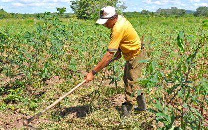 Banco do Nordeste regulariza R$ 4,5 bilhões  de dívidas com produtores rurais