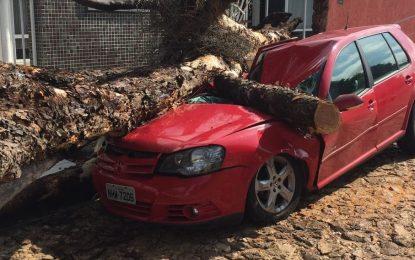 Forte chuva derruba árvore e carro fica destruído em Teresina