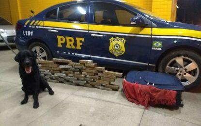 PRF prende mulher com mais de 26 kg de maconha em Floriano