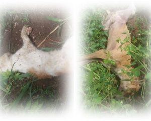 Em Guadalupe, cães e gatos estão sendo envenenados no bairro Cruzeta