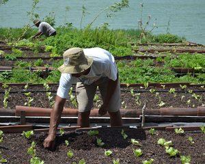 BNB regulariza R$ 1,7 bilhão em dívidas com produtores rurais em 2018