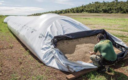 Ibama multa fazenda de Bom Jesus em 220 mil por desmatamento no Cerrado