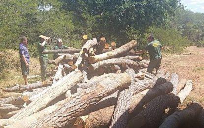 Carga ilegal de madeira nativa é apreendida em Landri Sales