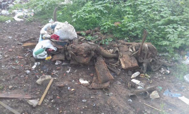 Restos de animais são jogados no lixão da cidade de Guadalupe