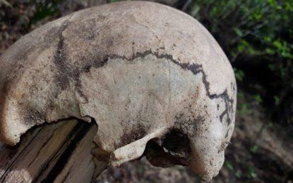 Crânio achado em Buriti dos Lopes pode ser de trabalhador rural