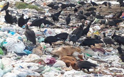 Centro de Zoonoses vai apurar matança de 15 cachorros em Floriano