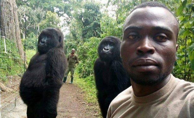 Conheça a história da selfie de guardas com gorilas que ficam de pé