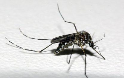 Casos confirmados de dengue crescem 14,6% no Piauí