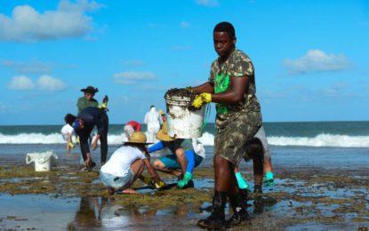 900 toneladas de óleo já foram recolhidas das praias, diz Marinha