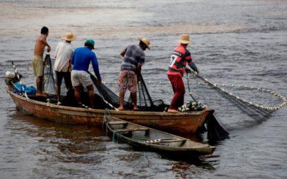 Começa o período de defeso de oito espécies de peixes amazônicos