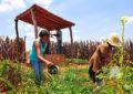Prazo para regularização de dívidas de produtores rurais termina neste mês